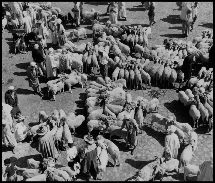 ALGERIA. Mzab. Ghaidaïa. 1966. Among the Ibadites. Cattle market.